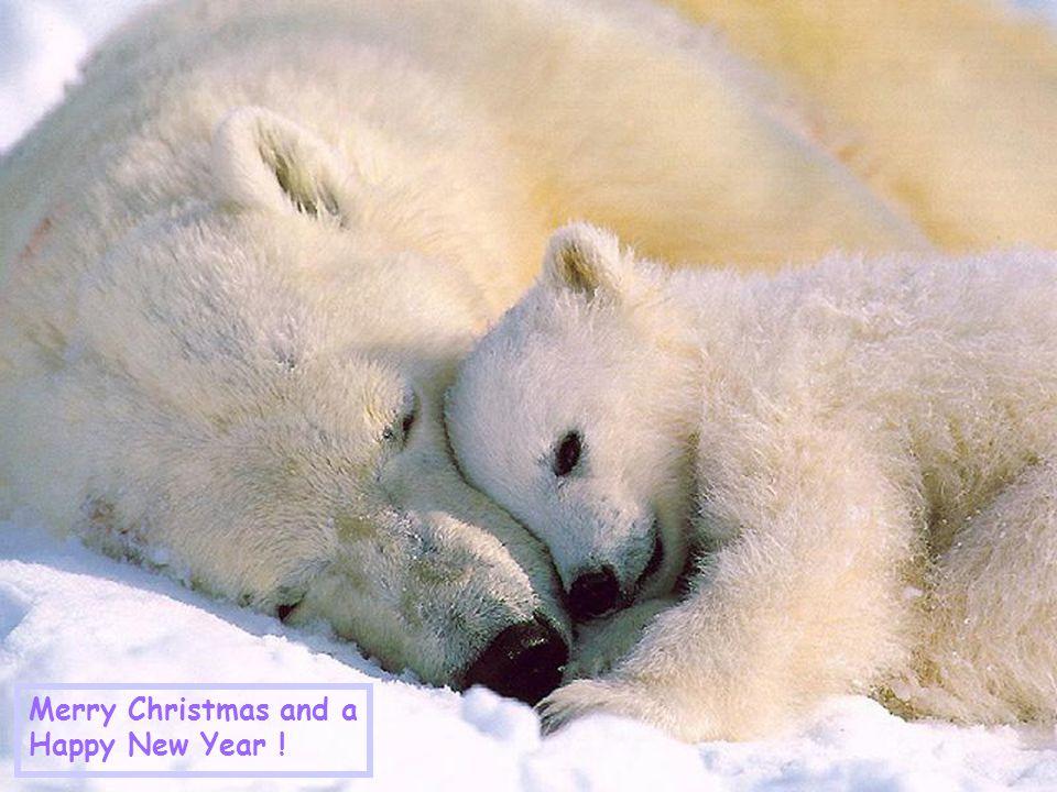 Kerstmis is… Jezus opnieuw laten geboren worden voor iedereen!