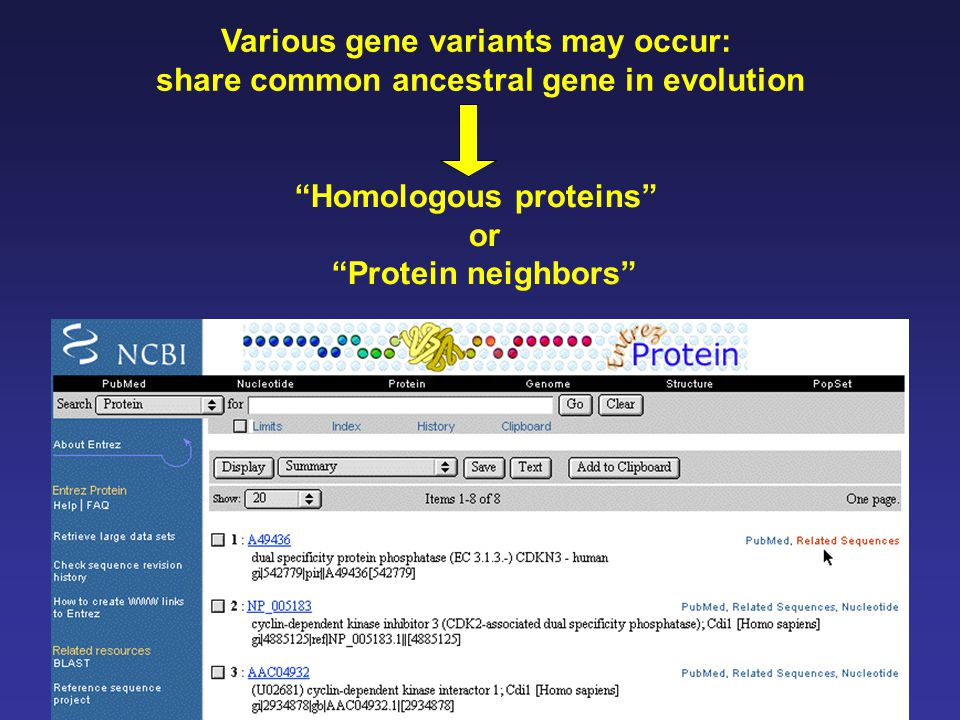 Various gene variants may occur: share common ancestral gene in evolution Homologous proteins or Protein neighbors