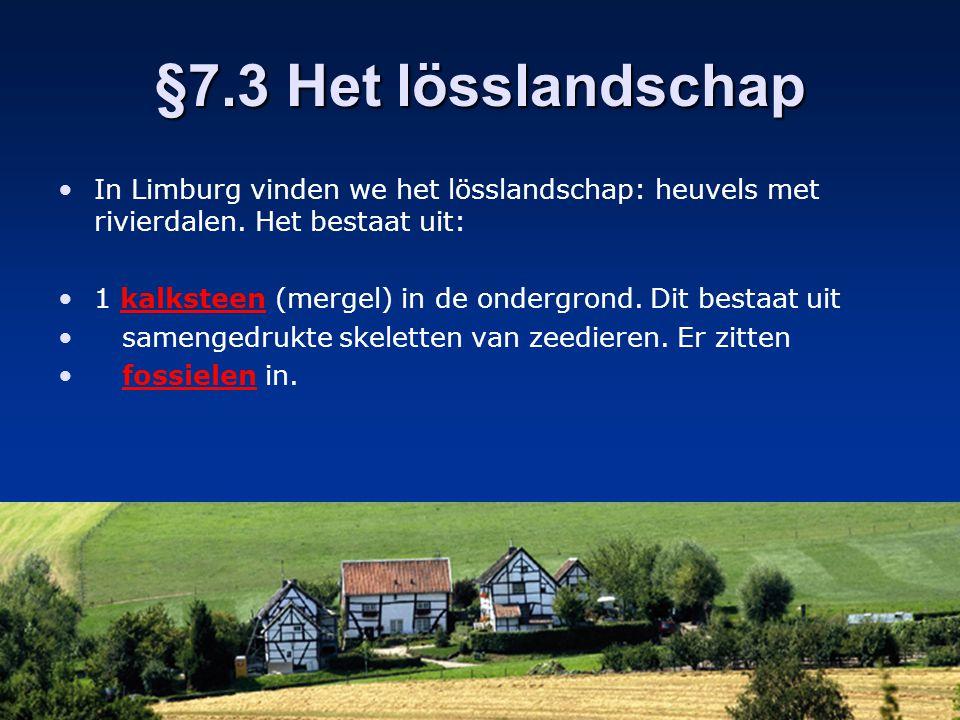 §7.3 Het lösslandschap In Limburg vinden we het lösslandschap: heuvels met rivierdalen. Het bestaat uit: 1 kalksteen (mergel) in de ondergrond. Dit be
