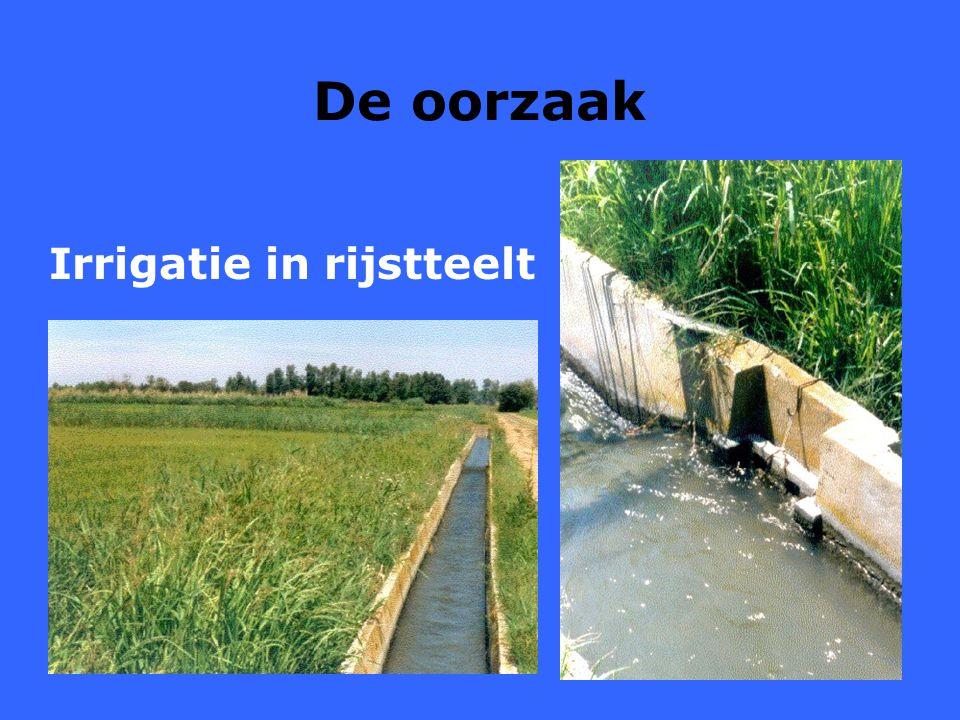 10 De oorzaak Irrigatie in rijstteelt