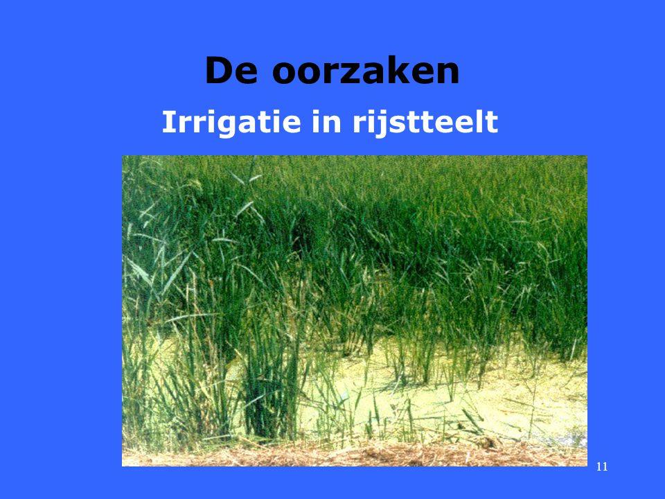 11 De oorzaken Irrigatie in rijstteelt