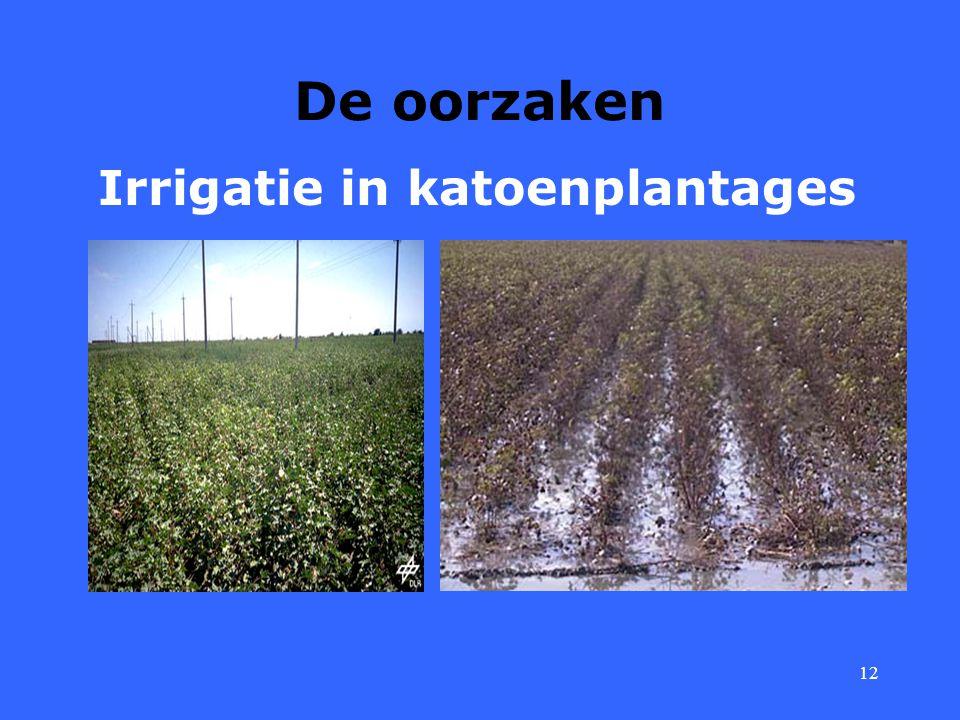 12 De oorzaken Irrigatie in katoenplantages
