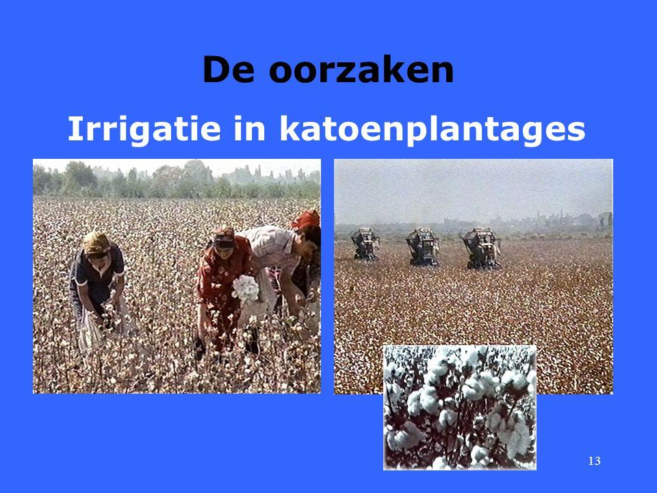 13 De oorzaken Irrigatie in katoenplantages