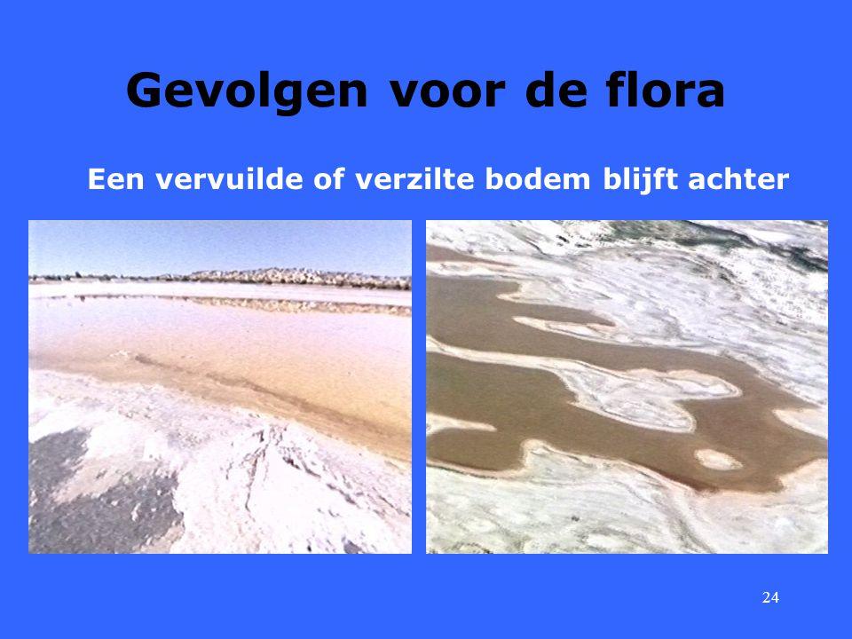 24 Gevolgen voor de flora Een vervuilde of verzilte bodem blijft achter