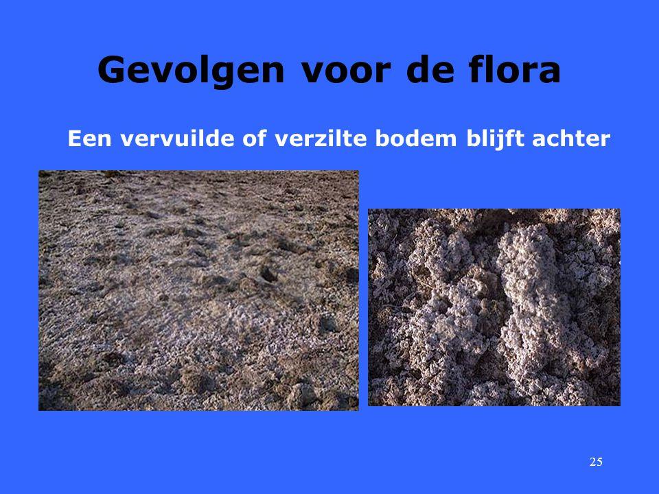 25 Gevolgen voor de flora Een vervuilde of verzilte bodem blijft achter