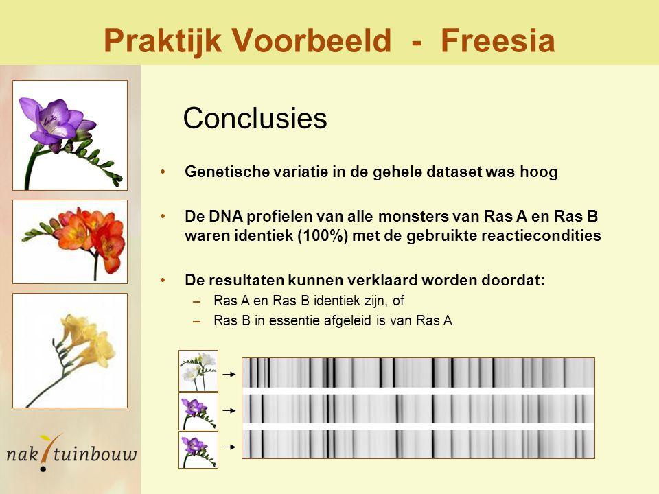 Praktijk Voorbeeld - Freesia Genetische variatie in de gehele dataset was hoog De DNA profielen van alle monsters van Ras A en Ras B waren identiek (100%) met de gebruikte reactiecondities De resultaten kunnen verklaard worden doordat: –Ras A en Ras B identiek zijn, of –Ras B in essentie afgeleid is van Ras A Conclusies