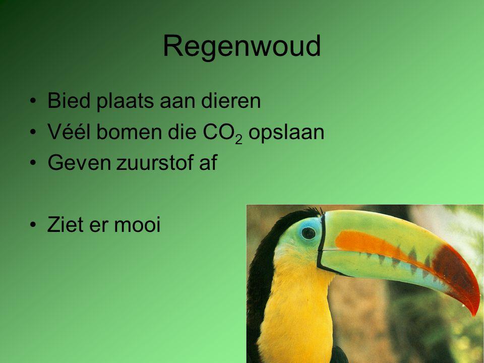 Regenwoud Bied plaats aan dieren Véél bomen die CO 2 opslaan Geven zuurstof af Ziet er mooi