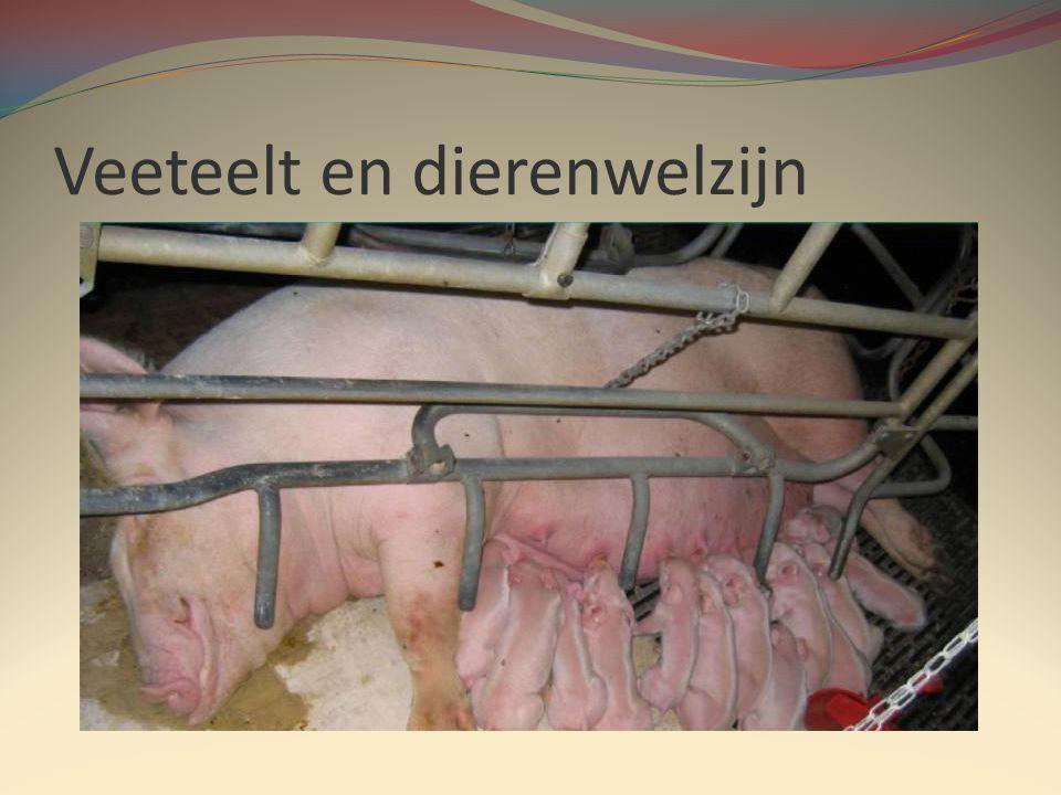 Veeteelt en dierenwelzijn