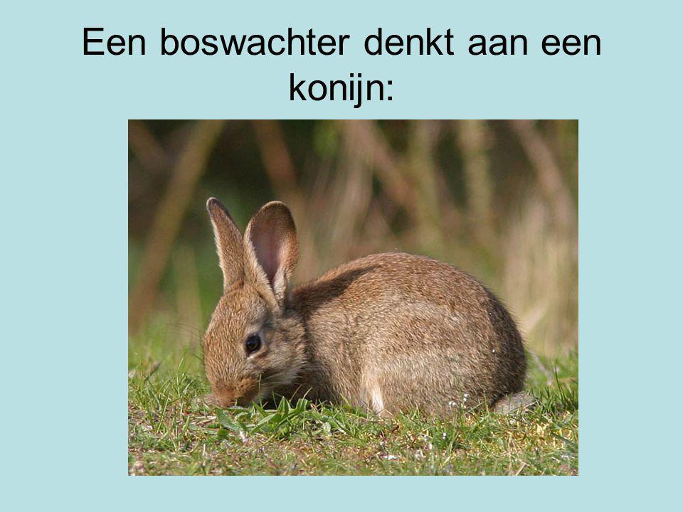 Een boswachter denkt aan een konijn: