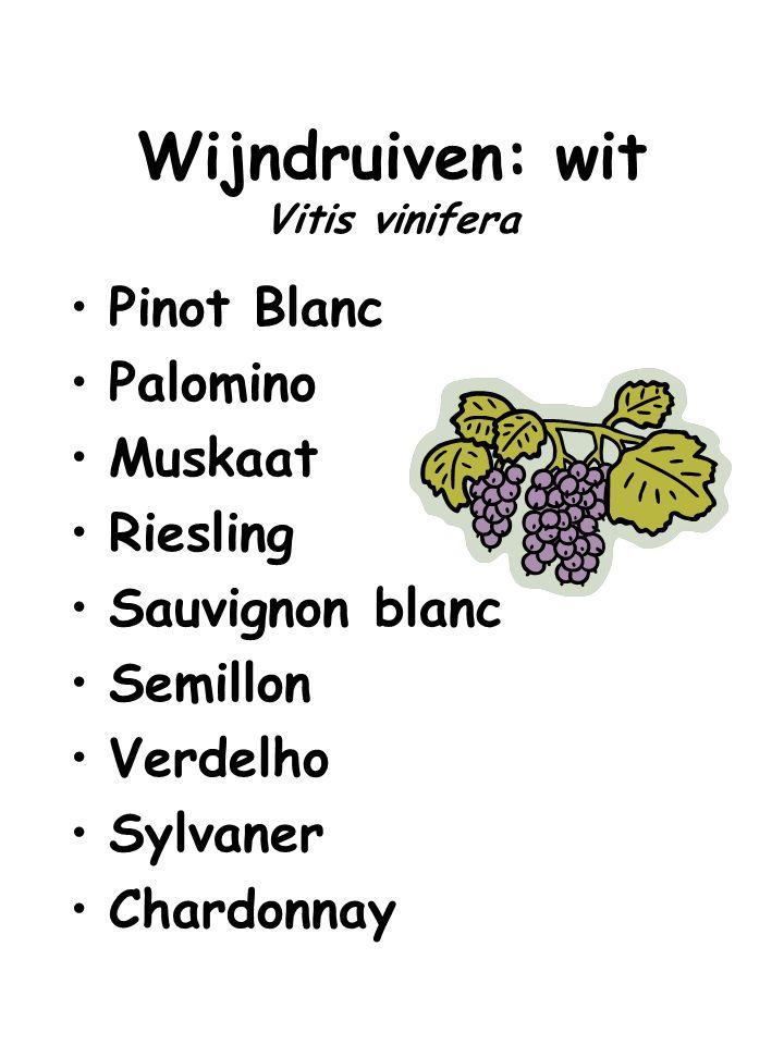 Wijndruiven: wit Vitis vinifera Pinot Blanc Palomino Muskaat Riesling Sauvignon blanc Semillon Verdelho Sylvaner Chardonnay