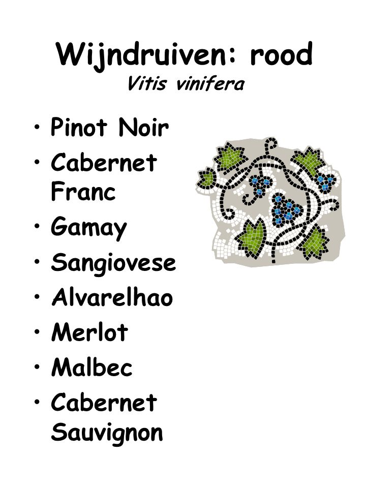 Wijndruiven: rood Vitis vinifera Pinot Noir Cabernet Franc Gamay Sangiovese Alvarelhao Merlot Malbec Cabernet Sauvignon