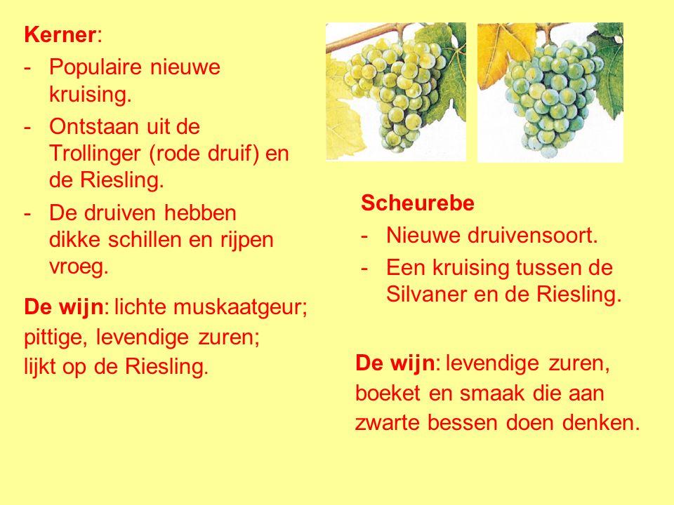 Müller-Thurgau: -Kruising van twee soorten, de Riesling en de Silvaner. -Ontwikkeld in 1882 in Geisenheim door prof. H. Müller uit Thurgau in Zwitserl