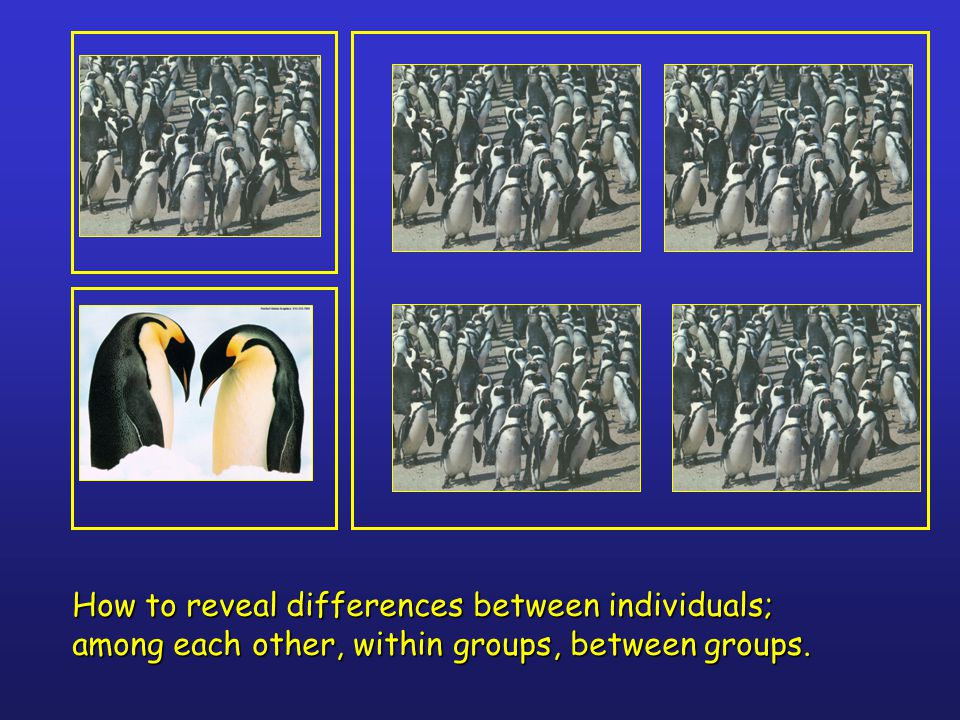 How to reveal differences between individuals; among each other, within groups, between groups.