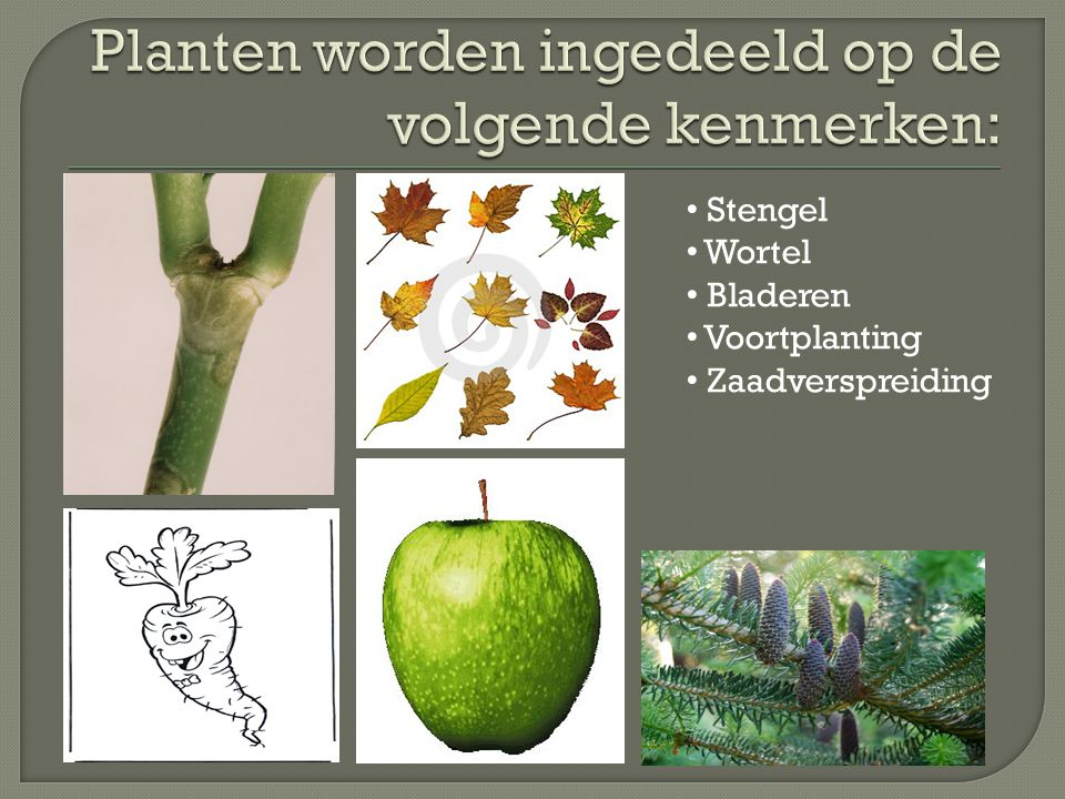 Stengel Wortel Bladeren Voortplanting Zaadverspreiding
