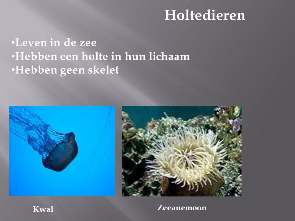 Holtedieren Leven in de zee Hebben een holte in hun lichaam Hebben geen skelet Zeeanemoon Kwal