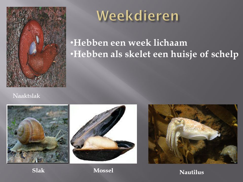 Mossel Nautilus Slak Hebben een week lichaam Hebben als skelet een huisje of schelp Naaktslak