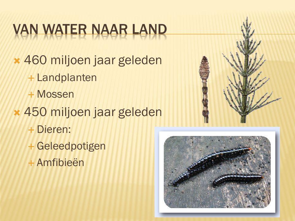 460 miljoen jaar geleden  Landplanten  Mossen  450 miljoen jaar geleden  Dieren:  Geleedpotigen  Amfibieën