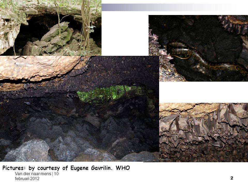 23 Van dier naar mens | 10 februari 2012 Fig.1.