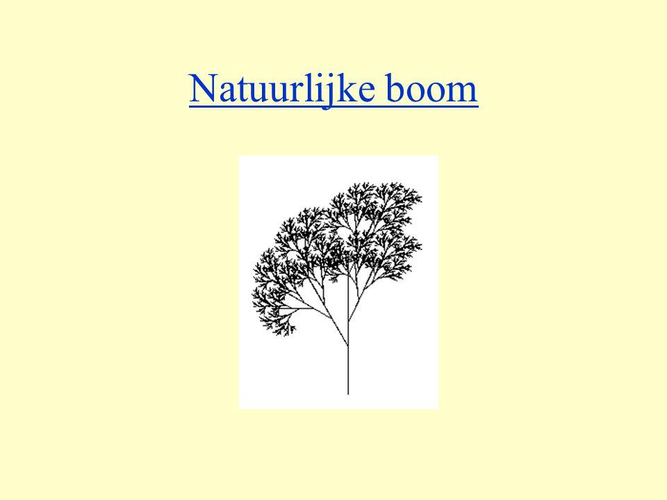 Natuurlijke boom