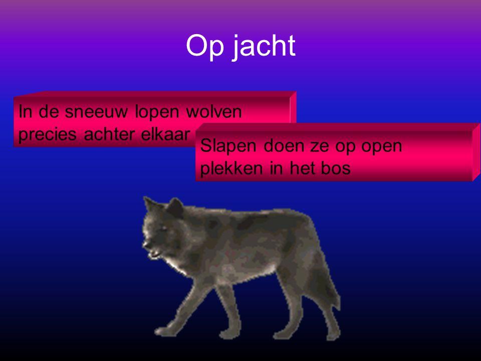 De inhoud Wat wolven eten Van mij Op jacht Gevaarlijk De kleintjes Horen, zien en rennen Lekker warm Soorten wolven Grijze en rode wolven Wolven en me
