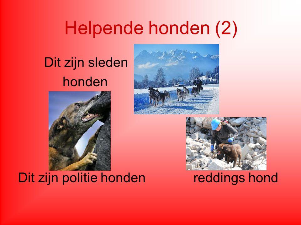 weetjes 1.In Nederland zijn er meer dan anderhalf miljoen honden.