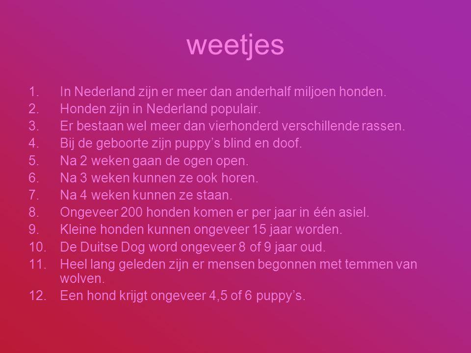 weetjes 1.In Nederland zijn er meer dan anderhalf miljoen honden. 2.Honden zijn in Nederland populair. 3.Er bestaan wel meer dan vierhonderd verschill