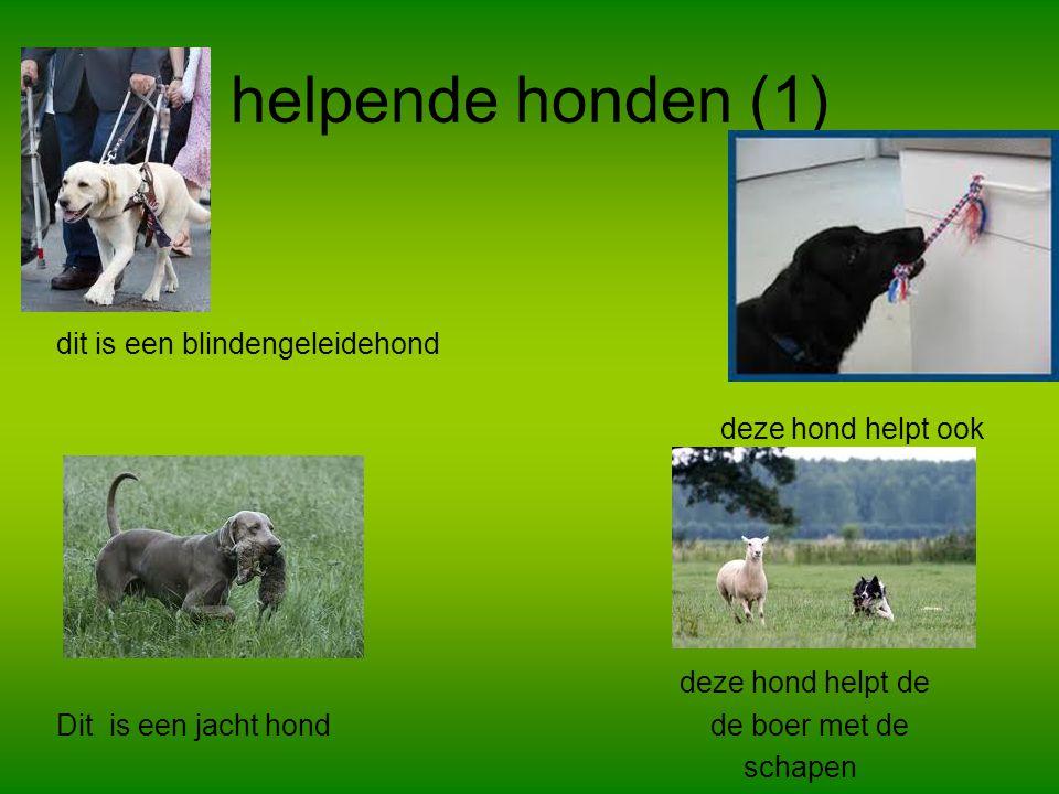 Helpende honden (2) Dit zijn sleden honden Dit zijn politie honden reddings hond