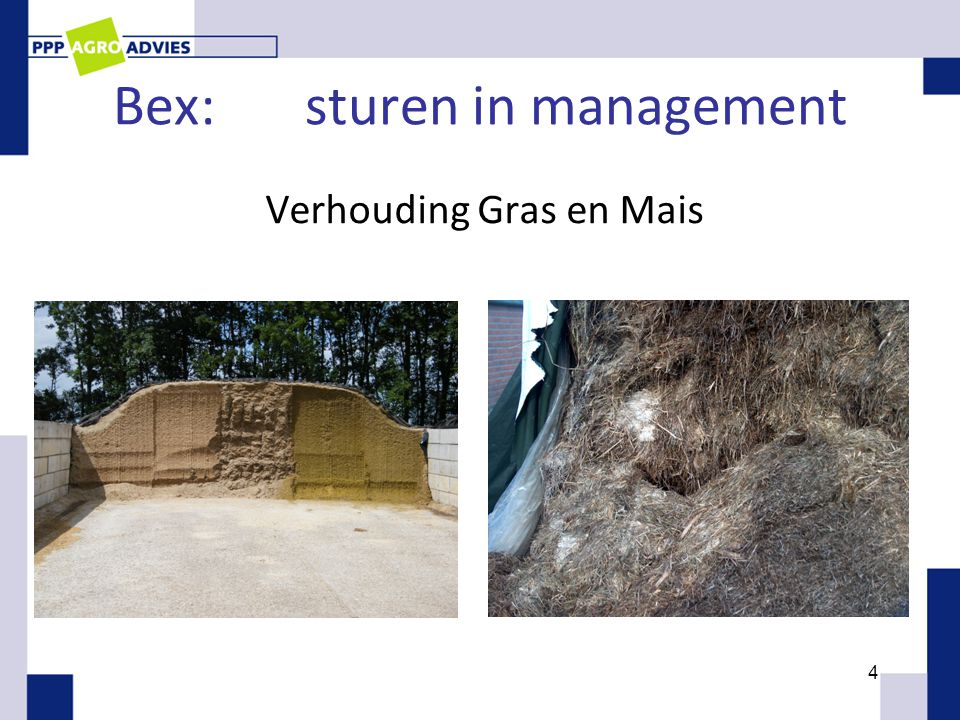 Bex:sturen in management Verhouding Gras en Mais 4