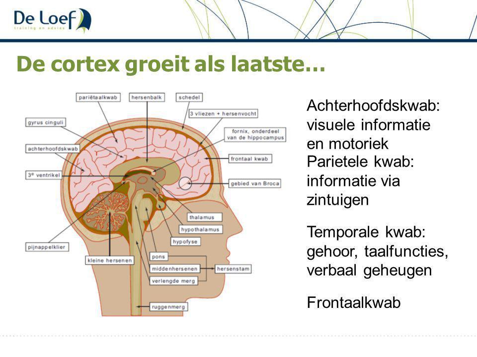 De cortex groeit als laatste… Parietele kwab: informatie via zintuigen Temporale kwab: gehoor, taalfuncties, verbaal geheugen Frontaalkwab Achterhoofdskwab: visuele informatie en motoriek
