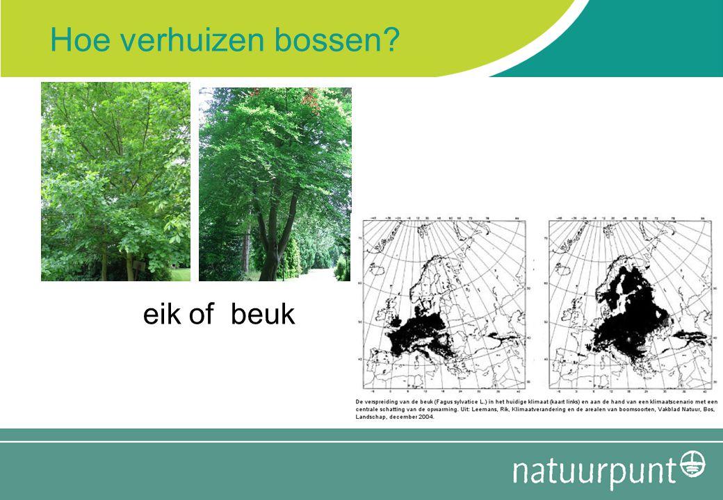 Hoe verhuizen bossen? eik of beuk
