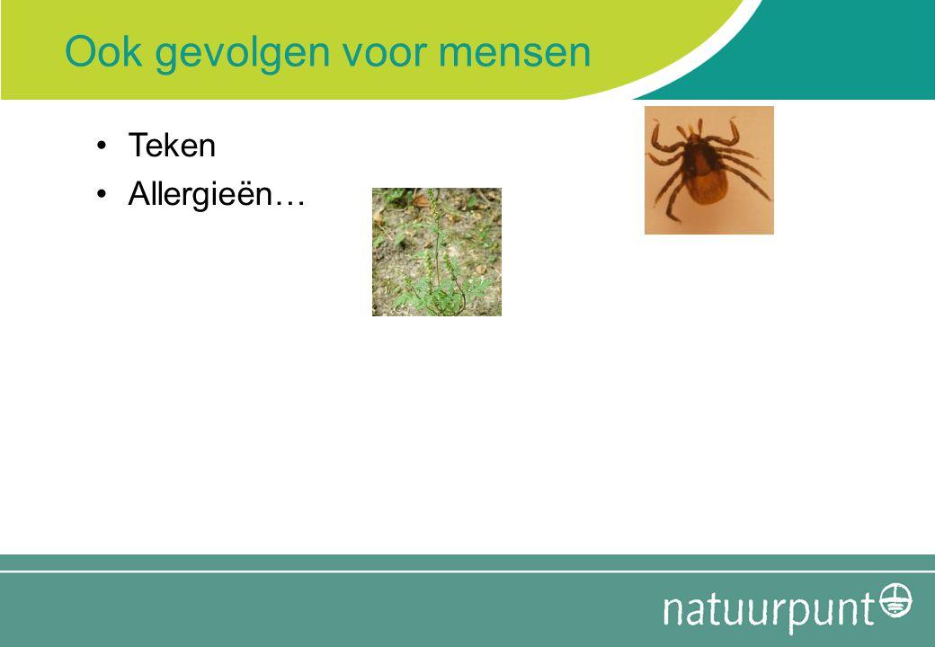 Ook gevolgen voor mensen Teken Allergieën…