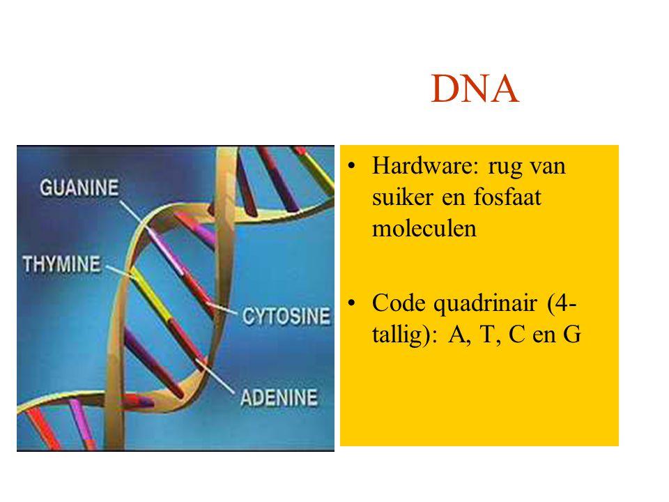 Computer DNA Hardware: elektronische verbindingen in chips Code binair(2-tallig): 0 en 1 Hardware: rug van suiker en fosfaat moleculen Code quadrinair (4- tallig): A, T, C en G DNA