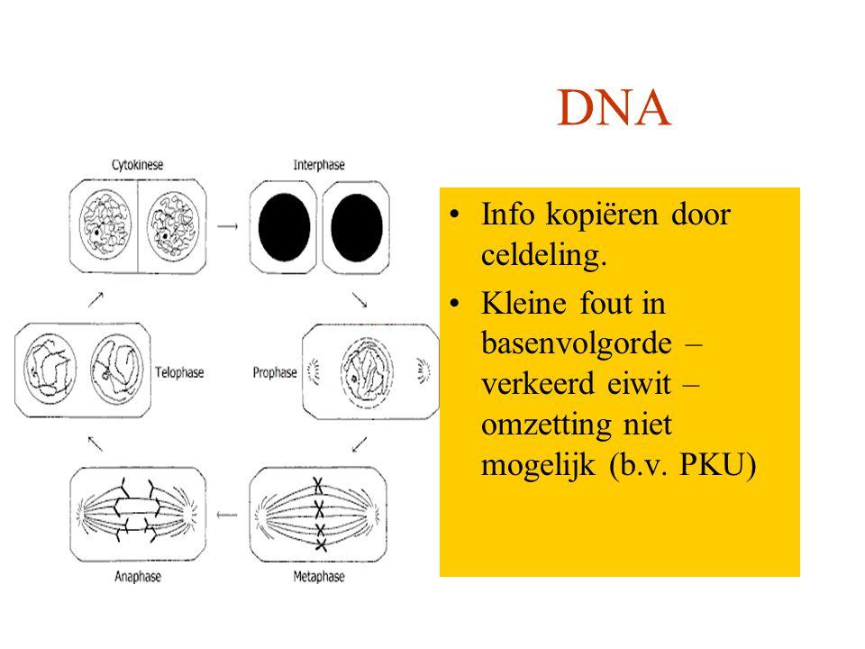 Computer DNA Info kopiëren dmv floppy, cd-rom. Kleine fout in machinetaal – programma werkt niet Info kopiëren door celdeling. Kleine fout in basenvol