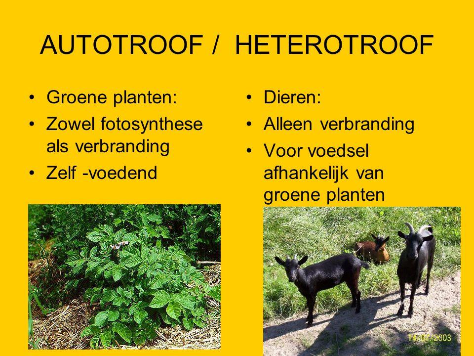 AUTOTROOF / HETEROTROOF Groene planten: Zowel fotosynthese als verbranding Zelf -voedend Dieren: Alleen verbranding Voor voedsel afhankelijk van groen
