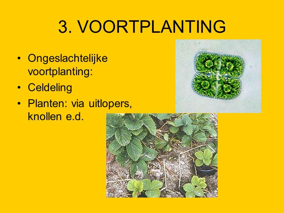 3. VOORTPLANTING Ongeslachtelijke voortplanting: Celdeling Planten: via uitlopers, knollen e.d.