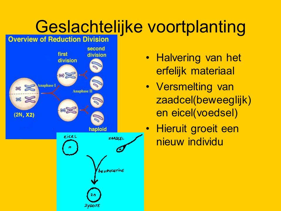 Geslachtelijke voortplanting Halvering van het erfelijk materiaal Versmelting van zaadcel(beweeglijk) en eicel(voedsel) Hieruit groeit een nieuw indiv