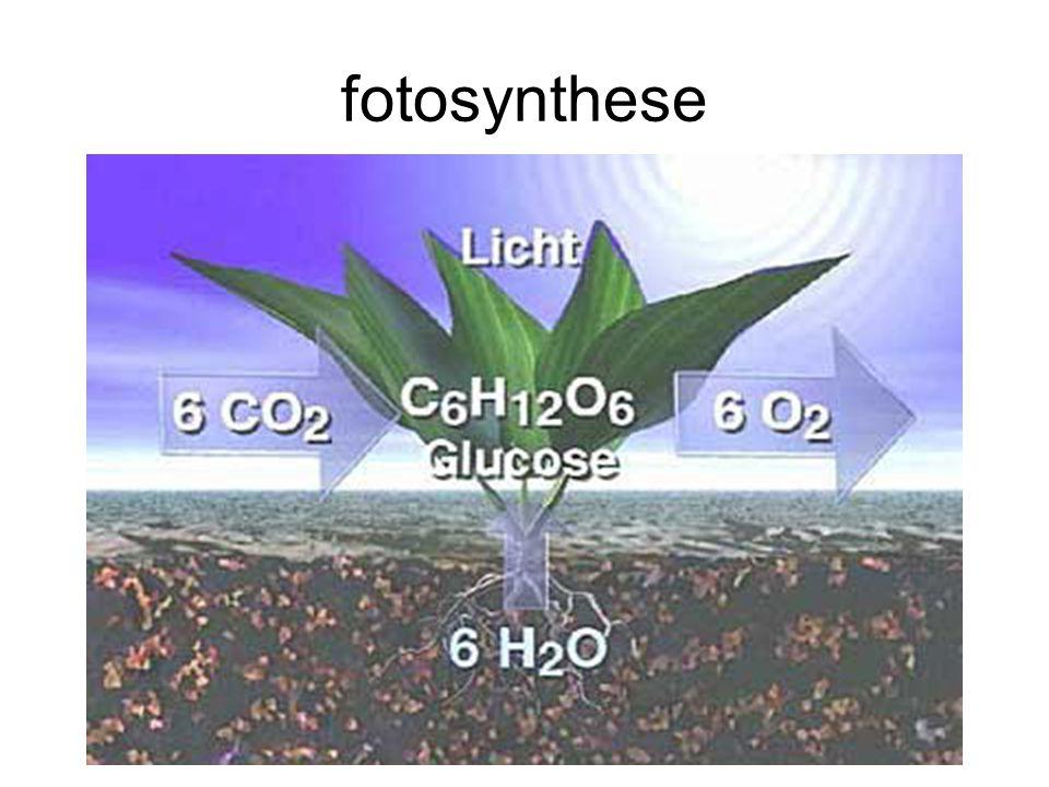Stoffen, moleculen, atomen en elementen Moleculen zijn opgebouwd uit atomen.