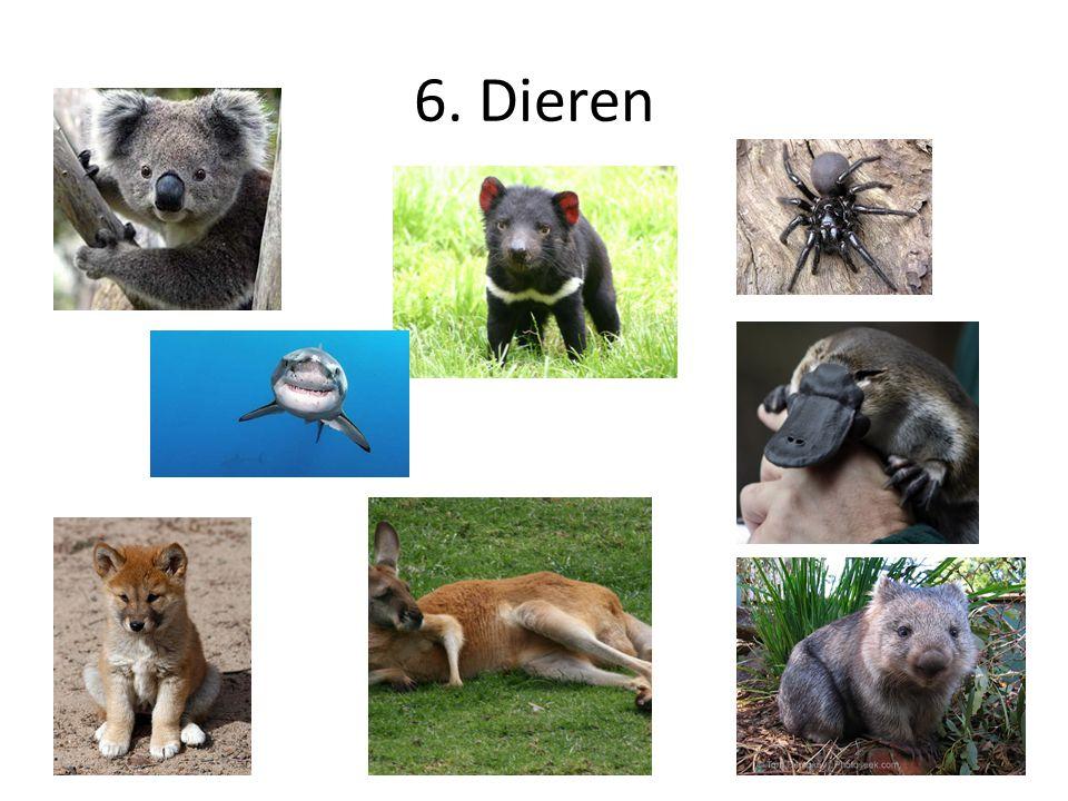 6. Dieren