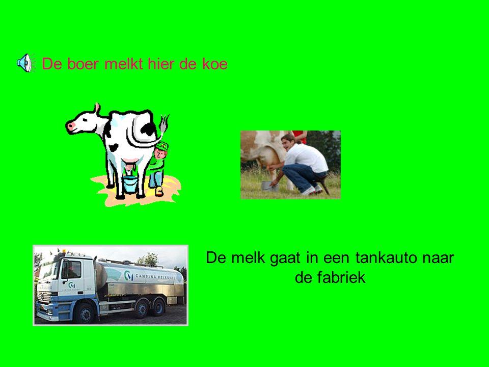 De boer melkt hier de koe De melk gaat in een tankauto naar de fabriek