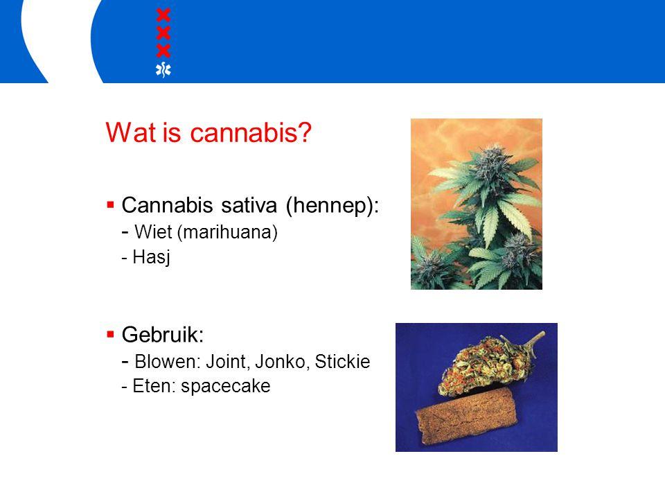 Wat is cannabis?  Cannabis sativa (hennep): - Wiet (marihuana) - Hasj  Gebruik: - Blowen: Joint, Jonko, Stickie - Eten: spacecake