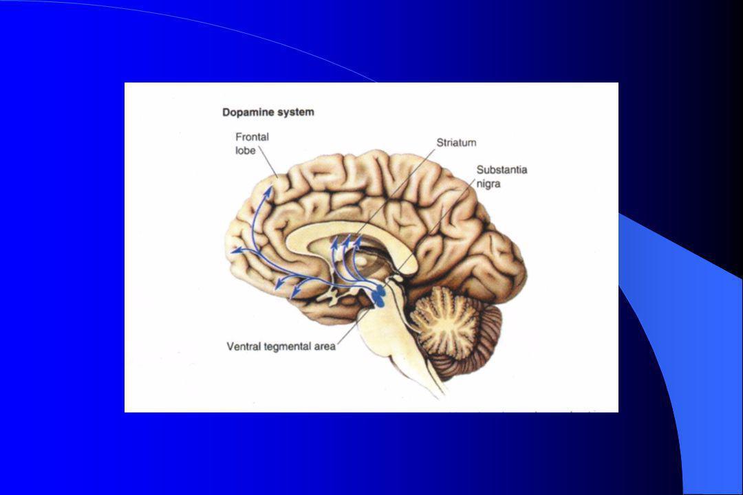 Functie frontale hersenschors (en limbische systeem) Systeem koppelt een emotionele betekenis aan de informatie die binnenkomt.