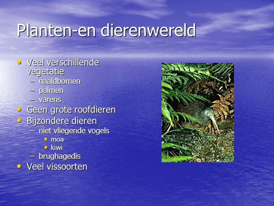 Planten-en dierenwereld Veel verschillende vegetatie Veel verschillende vegetatie –naaldbomen –palmen –varens Geen grote roofdieren Geen grote roofdieren Bijzondere dieren Bijzondere dieren –niet vliegende vogels moa moa kiwi kiwi –brughagedis Veel vissoorten Veel vissoorten