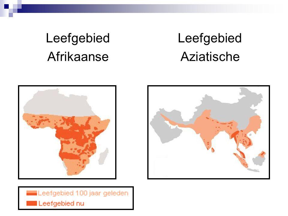 Leefgebied Afrikaanse Leefgebied Aziatische