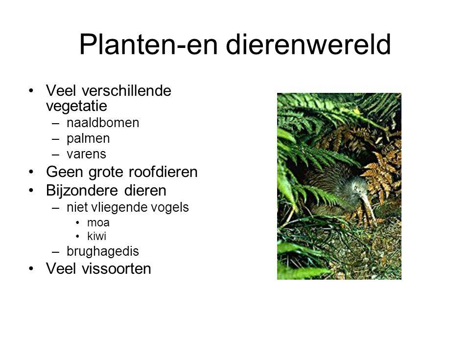 Planten-en dierenwereld Veel verschillende vegetatie –naaldbomen –palmen –varens Geen grote roofdieren Bijzondere dieren –niet vliegende vogels moa ki