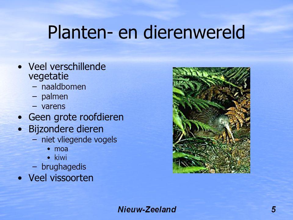 Nieuw-Zeeland5 Planten- en dierenwereld Veel verschillende vegetatie –naaldbomen –palmen –varens Geen grote roofdieren Bijzondere dieren –niet vliegende vogels moa kiwi –brughagedis Veel vissoorten