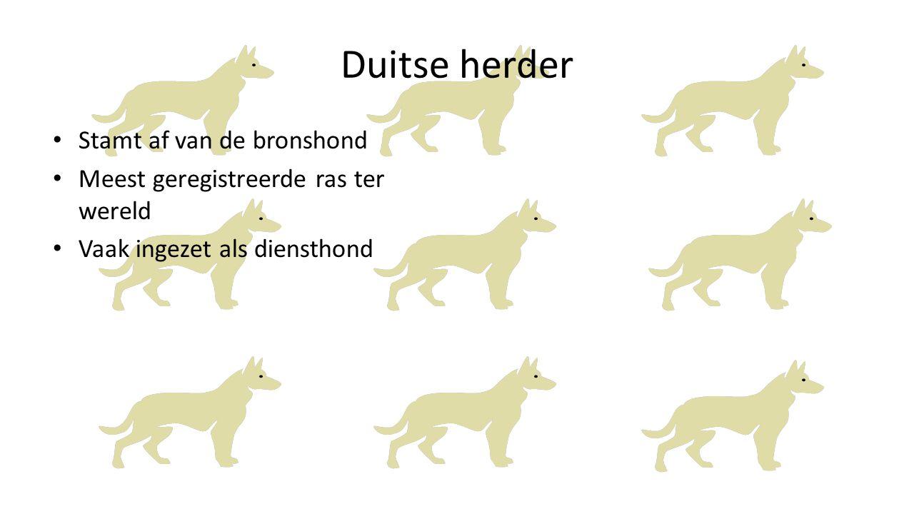 Duitse herder Stamt af van de bronshond Meest geregistreerde ras ter wereld Vaak ingezet als diensthond