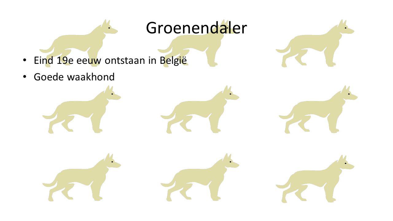 Groenendaler Eind 19e eeuw ontstaan in België Goede waakhond
