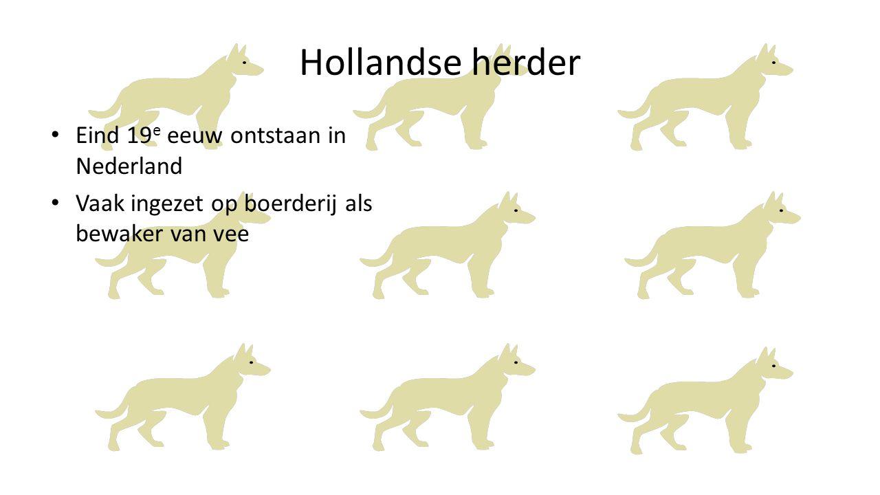 Hollandse herder Eind 19 e eeuw ontstaan in Nederland Vaak ingezet op boerderij als bewaker van vee