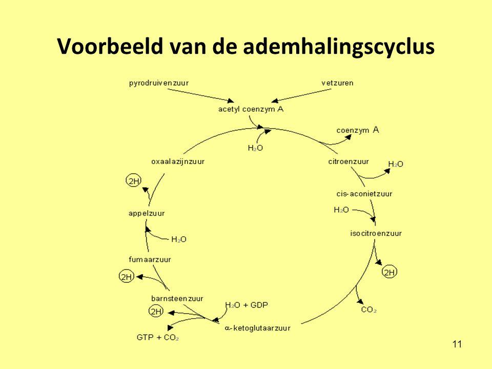11 Voorbeeld van de ademhalingscyclus
