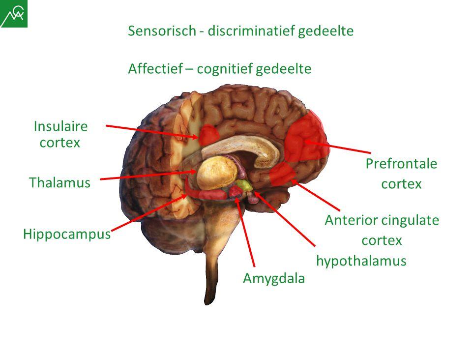 Anterior cingulate cortex Prefrontale cortex Hippocampus Amygdala Insulaire cortex Sensorisch - discriminatief gedeelte Affectief – cognitief gedeelte